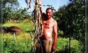 Веник сорго хозяйственный: особенности выращивания веничного материала, как сделать метлу своими руками