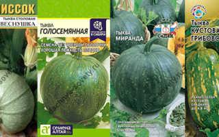 Зеленые сорта тыквы с фото и описанием: полосатая и продолговатая, бывает ли и как выглядит