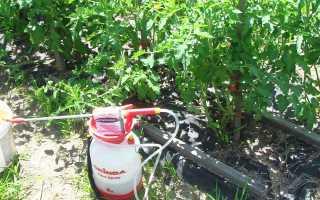 Применение Эпин на ростках по томатам | Садовник