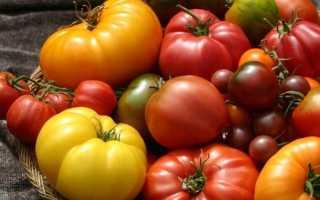 Самые сладкие сорта томатов: какие самые вкусные, мясистые и крупные, как выбрать сорт для теплицы и открытого грунта, лучшие виды с желтыми и красными плодами