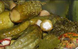 Огурцы с горчицей на зиму в банках: лучшие рецепты хрустящих заготовок с сухой горчицей и горчичными зернами