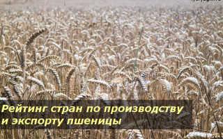 Страны экспортеры пшеницы: крупнейшие лидеры по производству зерна в мире, список основных производителей, мировой рынок выращивания и экспорта культуры