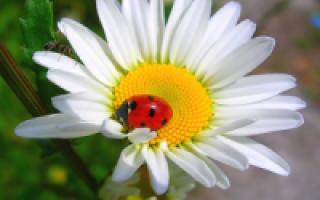 Боевые сорняки на участке: виды и методы устранения сорняков – статья пользователя OBI