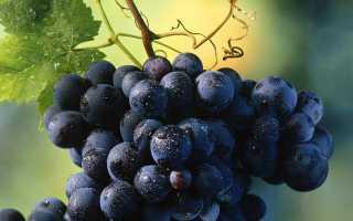 Темные сорта винограда: длинный черный, очень мелкий, коричневый, с длинными плодами, лучшие ранние, среднеспелые, поздние сорта