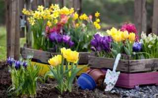 Садовые цветы, которые цветут все лето – фото с названиями (каталог)
