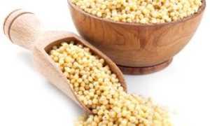 Пшено: из какого злака делают крупу, что получают из проса, зерна и продукт переработки