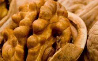Грецкие орехи: как сушить в домашних условиях, хранить и сушить ядра без скорлупы