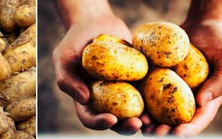 Какая картошка лучше для жарки: красная или белая, как выбрать сорт картофеля для еды в жареном виде и для варки