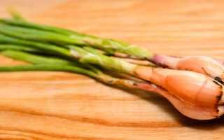 Лук Сорокозубка: выращивание, посадка и уход, когда садить под зиму, сроки сбора урожая, можно ли вырастить из луковиц