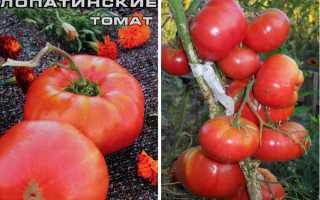 """Томаты """"Лопатинские"""": характеристика и описание этого сорта помидор, фото и отзывы"""