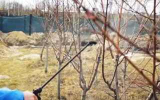 Весенний сад: чем опрыскивать деревья и кустарники когда   Дача