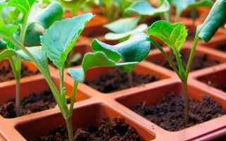 Брокколи: выращивание и уход в открытом грунте в Сибири, когда и как сеять семена, выращивание в теплице