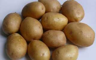 Картофель Джелли: описание сорта, фото, отзывы о вкусовых качествах и особенностях выращивания, характеристика урожайности и советы агрономов