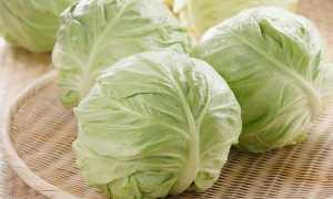 Можно ли солить раннюю капусту на зиму или квасить её: аргументы за и против, лучшие рецепты засолки скороспелой капусты, как засолить её в августе