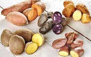 Кормовая картошка: что это такое и есть ли она в природе, чем отличается от обычного, в чем различие со столовым, особенности посадки и выращивания