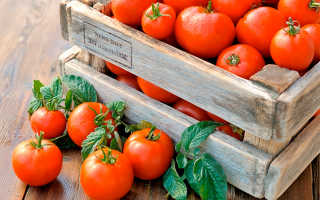 Как сохранить помидоры долго свежими и где их лучше хранить: подходящие сорта и правильная подготовка