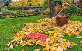 Осенний уход за газоном – подготовка к зиме: удобрение, подкормка, покос, полив; 4 сезона садовника