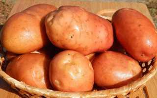 Сколько картофелин в 1 кг: примерное количество штук картошки в килограмме, советы по определению веса