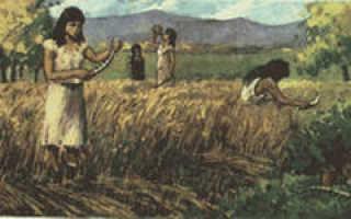 История происхождения и родина пшеницы на земле (страна), как она появилась, когда стали выращивать на Руси, история, откуда появилась, дикий предок