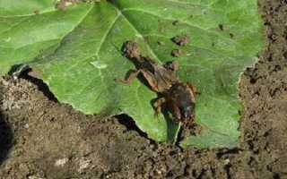 Вредители огурцов: Кто ест рассаду огурцов в теплице на клумбе