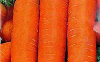 Морковь Болтекс: описание сорта и отзывы об урожайности, характеристика гибрида, особенности выращивания и ухода, сроки созревания, описание вкусовых качеств