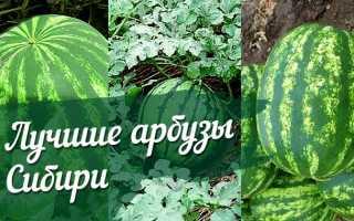Сорта арбузов для Сибири: какой вид предпочтительнее садить на Алтае, лучшие семена и их фото в открытом грунте