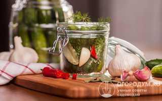 Соленые огурцы с горчицей на зиму: что дает горчица и её семена при засолке, как посолить хрустящие огурчики в банках быстро и вкусно