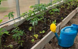 Подкормка помидоров в теплице: какие удобрения и когда использовать, как правильно подкармливать томаты летом