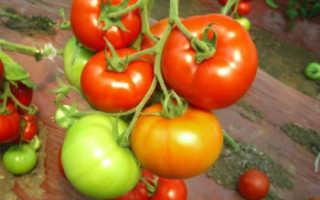 """Томат """"Красным красно F1"""": отзывы об урожайности тех кто сажал, характеристика и описание сорта с фото, семена премиум класса"""