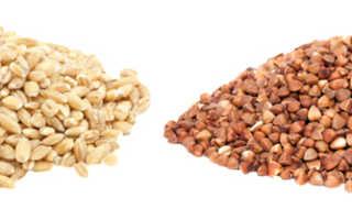 Сравнить перловку и гречку: что калорийнее и полезней, какая крупа лучше, где больше углеводов, возможный вред и противопоказания