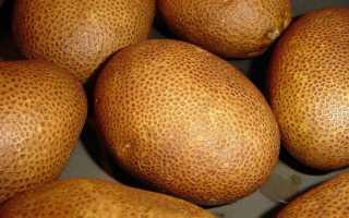 Картофель Репанка: описание сорта с желтой и белой мякотью и красной шершавой кожурой, фото клубней, отзывы о выращивании и характеристика вкусовых качеств