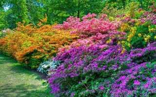Многолетние кустарниковые цветы для сада: названия, фото и описание