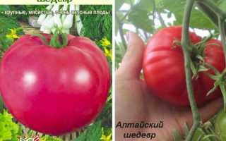 """Сорт томата """"Шедевр F1"""": описание и урожайность, отзывы с фото, шедевр ранний и другие виды"""