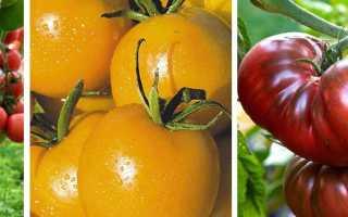 Желтые помидоры для теплицы: лучшие сорта томатов, их описание, критерии выбора подходящего вида