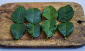 Листья лайма (каффир-лайма): состав и польза, способы применения свежих и сушеных листьев древесного кафрского лайма, чем их можно заменить