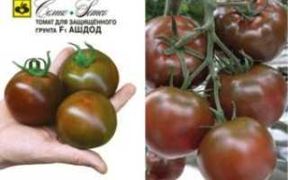Томат этуаль: описание сорта, его преимущества и недостатки, отзывы о выращивании этих помидоров