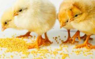Чем кормить кур в домашних условиях: рацион и питание