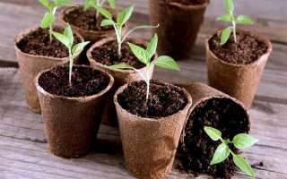 Торфяные горшки для рассады: как использовать, посадка растений, как сделать своими руками, отзывы
