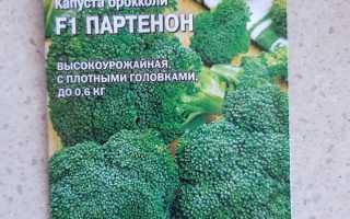 Капуста брокколи Партенон f1: описание и характеристика сорта, когда лучше сажать на рассаду, отзывы о вкусовых качествах
