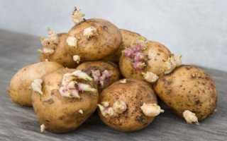 Из чего прорастает картофель: как стимулировать проращивание клубней для посадки, основные правила и сколько времени понадобится, способы и методы обработки