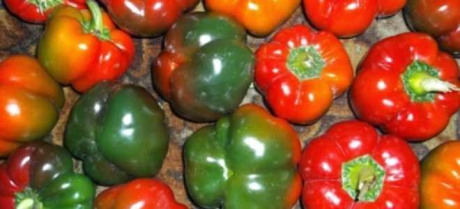 Перец Гогошар: описание сортотипа и фото, отзывы, выращивание ратунды и болгарского сортов, что это такое