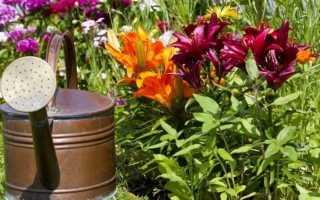 Что и как власть лилии от цветения? Принципы июня и весеннего оплодотворения