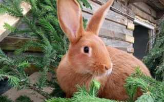 Какие ветки можно и нельзя скармливать кроликам: советы по комплектации