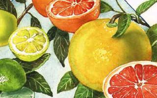 Гранат – это цитрус или нет: цитрусовый фрукт или нет, к какому роду относится