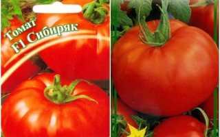 Томат Сибиряк: характеристика и описание сорта, его урожайность, отзывы дачников, фото помидоров, а также пара слов о сортах-тезках (Мамин Сибиряк и т.д.)