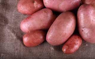 Картофель Дезире: характеристика и описание сорта, преимущества и недостатки картошки, её преимущества и недостатки, особенности выращивания