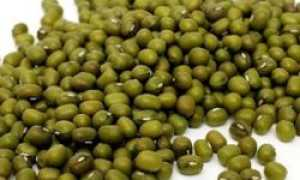 Что это такое – зеленые бобы маш (мунг) – полезные свойства, состав, особенности, вред и противопоказания