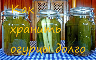 Как хранить огурцы (свежие): правила хранения овощей в квартире, подвале и других местах, как сохранить огурцы до зимы