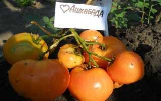 Томат Сердце Ашхабада: описание сорта и процесса его выращивания, отзывы фермеров и фото полученного урожая