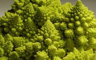 Капуста романеско с описанием, характеристиками и отзывами, а также особенностями выращивания этого растения